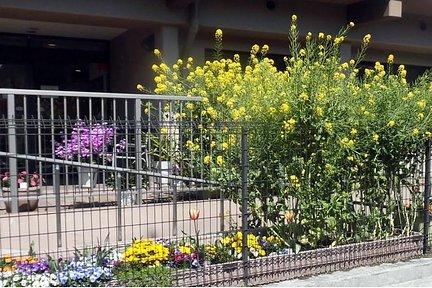 くらら上大岡 ホームの外周を彩るお花